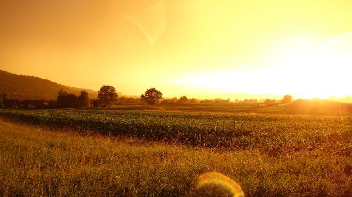 cereal-crop-cropland-587970